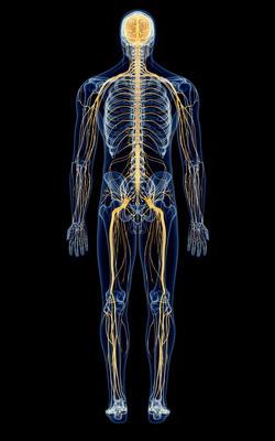 神経断面図